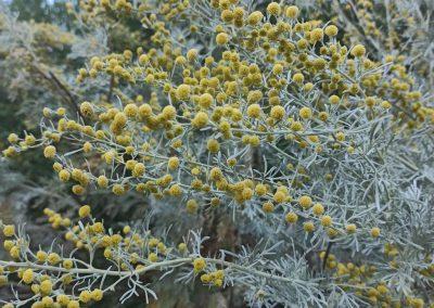 La Radici di Artemisia  – Opere Gentili                             (6 giugno e 11 luglio)